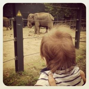 Elliot olifanten